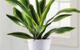 9 loại cây trồng để trang trí, hút khí độc trong nhà