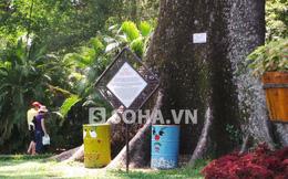 """Những cây cổ thụ độc nhất khiến khách nước ngoài """"ngưỡng mộ"""" ở SG"""
