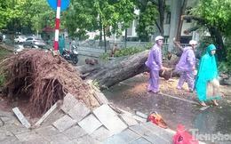 Mưa lớn cổ thụ bật gốc chắn ngang đường phố Hà Nội