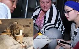 Đoàn cứu trợ Sài Gòn bật khóc khi gỡ băng keo cho chú chó bị hoại tử mõm