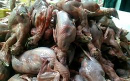 Thịt chim rỉ dịch vàng, thịt lợn có cục hạch... suýt thành món ăn