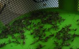 Mẹo làm bẫy muỗi vô cùng đơn giản nhưng hiệu quả bất ngờ