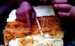 Bến Tre cấm nuôi đuông dừa làm mồi nhậu