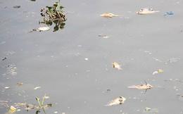 Giải mã việc cá kênh Nhiêu Lộc – Thị Nghè chết hàng loạt