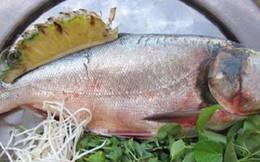 Thuốc quý từ món cá mè