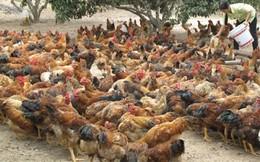 """Phó Thủ tướng yêu cầu xử lý nghiêm vụ """"quan xã ăn gà"""" ở Quảng Nam"""