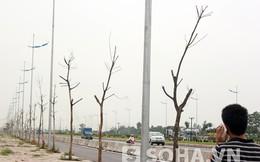 Cận cảnh hàng trăm cây tiền triệu chết khô trên cao tốc nghìn tỷ