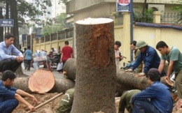 Yêu cầu kiểm điểm lãnh đạo Hà Nội vụ chặt cây xanh