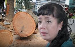 20 câu nói hay và đau xót nhất về vụ chặt cây tại Hà Nội