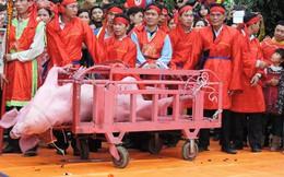 """""""Chúng tôi kịch liệt phản đối lễ hội chém lợn ở sân đình"""""""