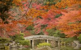 Ngắm sắc Thu đẹp ngỡ ngàng ở cố đô Kyoto, Nhật Bản