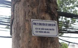 Hà Nội treo biển chuyển cây nhưng không có đường dây nóng