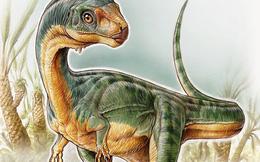 Chilesaurus - Khủng long ăn thịt mà lại... gặm cỏ
