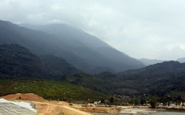 """""""Săn"""" nấm lim xanh giá tính bằng vàng dưới chân núi Tam Đảo"""