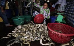 """Rùng mình cảnh tay không bắt rắn biển có """"nọc độc chết người"""""""