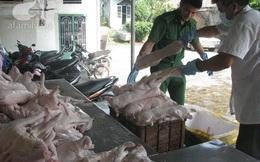 Thịt lợn thối được tiêm thuốc an thần, ngâm hóa chất để biến thành thịt tươi