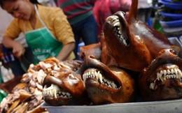 5 triệu con chó bị biến thành món nhậu mỗi năm tại Việt Nam
