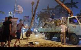 Đình chỉ công tác hàng loạt cán bộ liên quan vụ chặt cây xanh ở Hà Nội