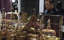 Người sở hữu những chú chim độc nhất có giá vài tỷ đồng ở VN