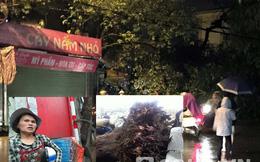 """Cây xà cừ ở Hà Nội đổ lúc trời mưa: """"Lẽ ra tôi đã chết rồi!"""""""