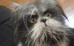 Cư dân mạng cãi nhau ỏm tỏi vì không biết con vật lắm lông này là chó hay mèo
