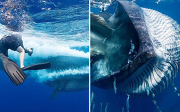Cá voi khổng lồ suýt nuốt chửng nhiếp ảnh gia
