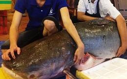 """""""Thủy quái"""" nặng 200kg vừa xuất hiện tại Sài Gòn"""