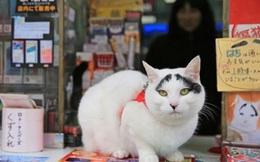 """Những con mèo này đang """"lên ngôi"""" tại đất nước Nhật Bản"""