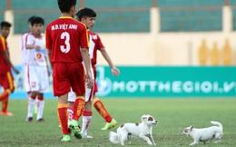 Bi hài chuyện chó chạy vào sân, cắn cầu thủ Việt
