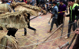 Độc đáo lễ hội 'trâu rơm bò rạ' ngày xuân
