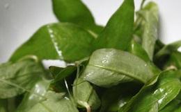 Những tác dụng phụ vô cùng đáng sợ của rau răm