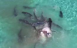7 ngày qua ảnh: Rùng mình cảnh đàn cá mập xé xác cá voi khổng lồ