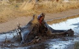 24h qua ảnh: Hải cẩu đực tóe máu khi đánh đuổi kẻ xâm phạm lãnh địa