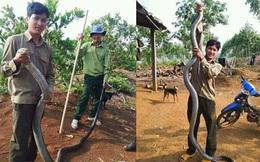 Chàng trai tay không bắt rắn khủng dài hơn 3m
