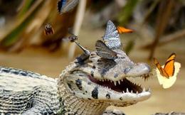 7 ngày qua ảnh: Cá sấu cười sung sướng bên bờ sông