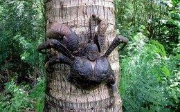 5 loài động vật khổng lồ 'khó tin' tồn tại trên trái đất