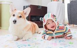 Loạt ảnh minh chứng chó là thành viên gia đình, không phải để ăn