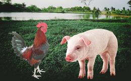 """""""Nhờ ơn"""" ngọn rau muống, con lợn con gà, gái làng Tây Hồ trở thành vợ vua"""