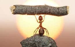 Chế tạo động cơ nhỏ hơn con kiến cả triệu lần có sức mạnh vô song!