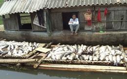 Cá chết trên sông Bưởi: Sớm có biện pháp xử lý công ty vi phạm