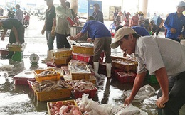 Người Mỹ, Nhật, Úc... ăn mạnh cá biển miền Trung