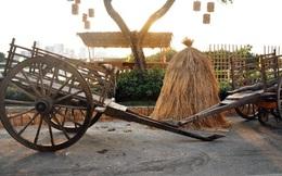 Cảnh quê bình dị giữa Sài Gòn đô hội ngày giáp Tết