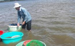 Ninh Thuận: Hến dày đặc lòng sông, 4 tiếng bắt được cả tạ