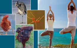 Đứng một chân: Động tác đơn giản mang lại hiệu quả đáng kinh ngạc