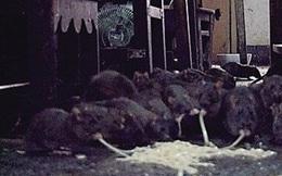 Kinh hãi phát hiện cụ ông 70 tuổi nuôi... 200 con chuột trong nhà