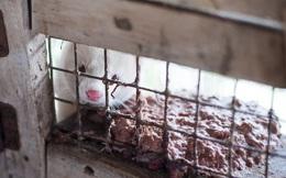 Địa ngục trần gian của những con thú bị lột da sống lấy lông