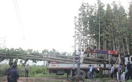 Điều tra bổ sung vụ cẩu cây dầu làm cúp điện toàn miền nam