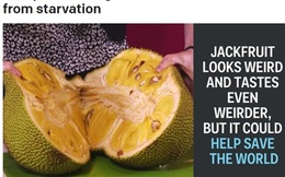 Báo Mỹ: Đặc sản Việt Nam giúp cứu đói cho hàng triệu người