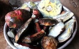 Thần dược giải nhiệt: 800 ngàn/kg, Hà Thành tranh nhau ăn
