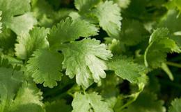 Sợ nhiễm độc kim loại nặng, hãy ăn loại rau quen thuộc này để thải độc